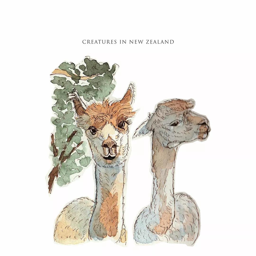 新西兰南岛手绘笔记